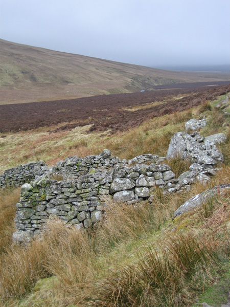 Another bield (NY306309) and yes I was walking with 'The Sheepfold Collector' today
