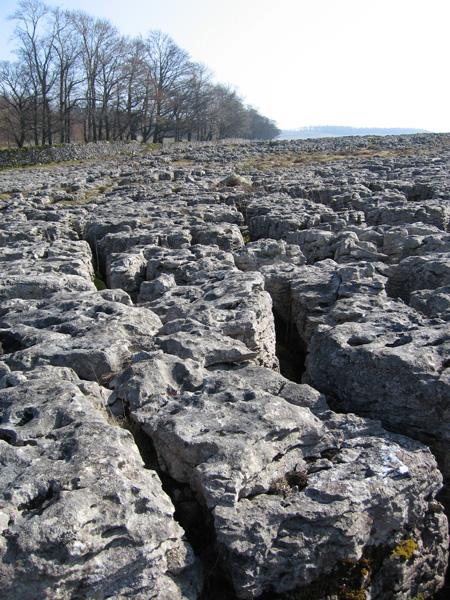Limestone pavement on Knipescar Common