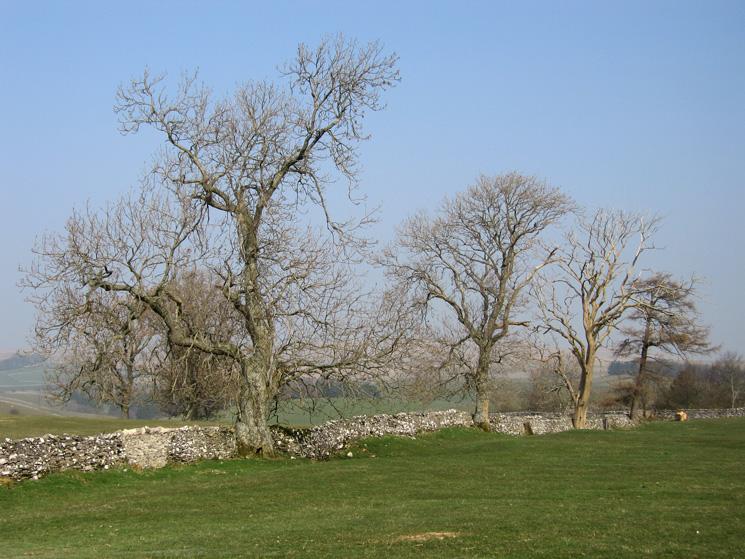 Limestone wall and trees