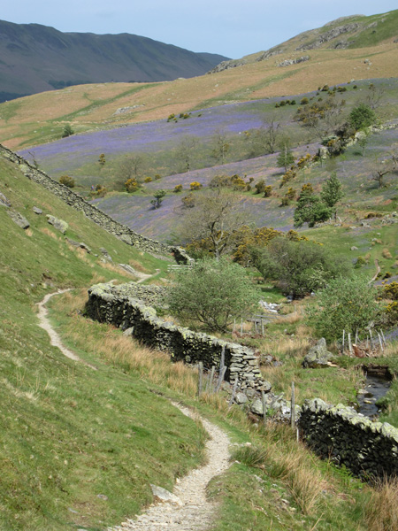 Looking back to the Rannderdale Bluebells