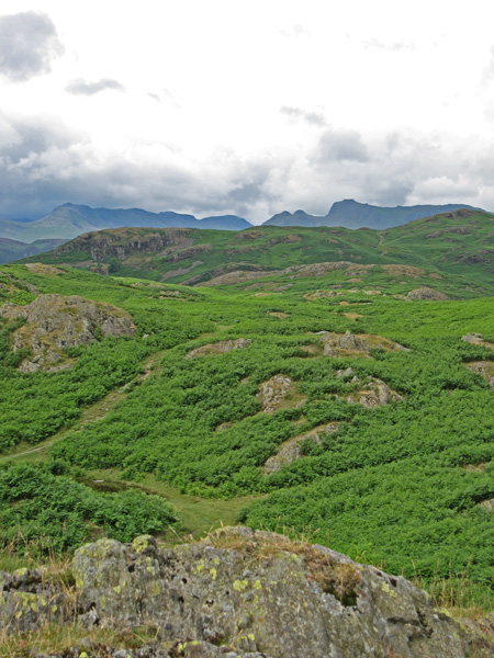 Loughrigg Fell with Bowfell and the Langdale Pikes beyond