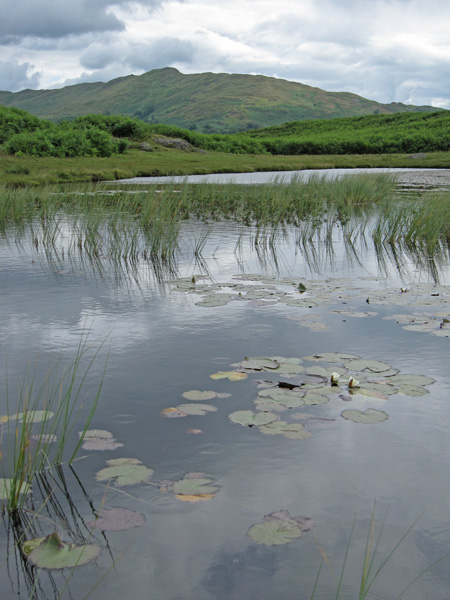 Wansfell Pike from Lily Tarn