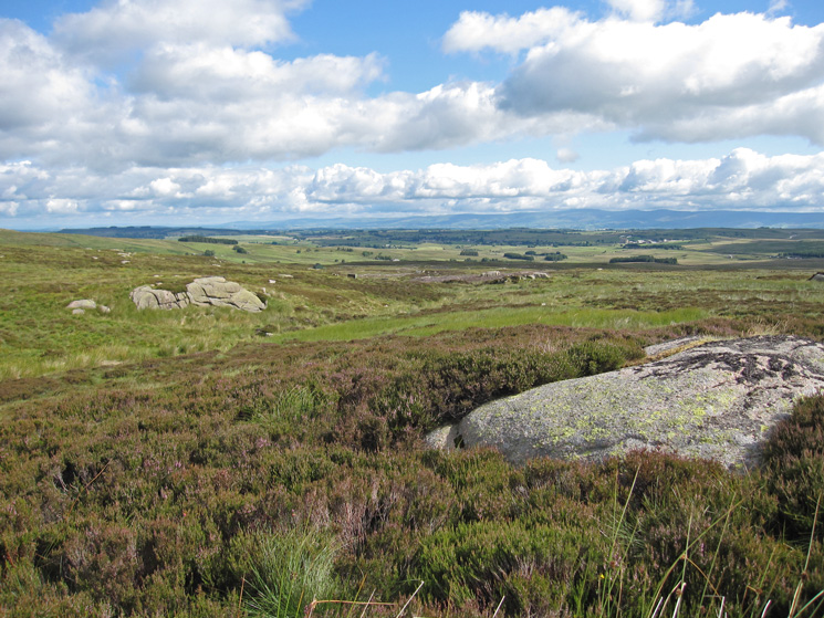 Heather moorland, not a good place to be if you are a grouse