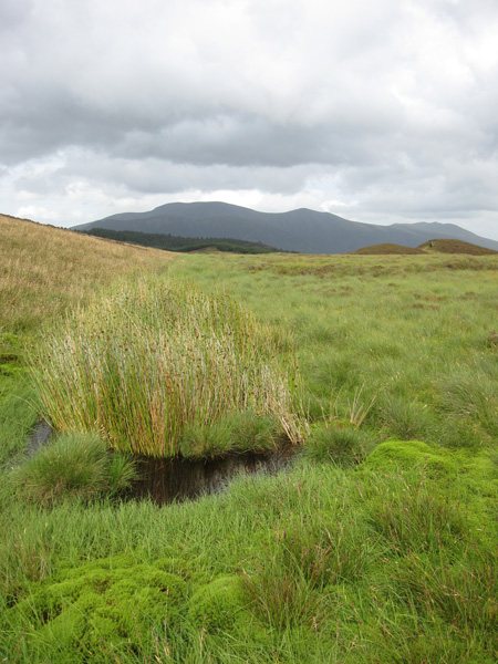 The Skiddaw fells and Blencathra on the far right