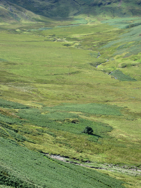 Mosedale and the Mosedale Holly Tree