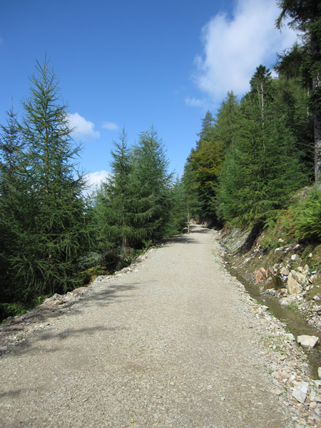 The first section of the forest track has been upgraded