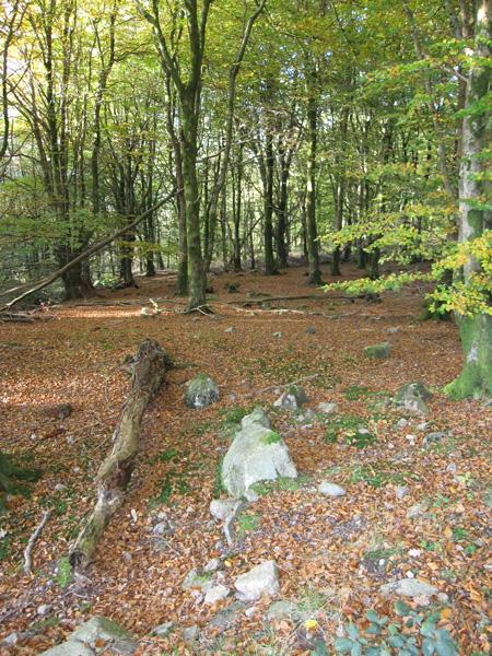 In Miterdale Forest