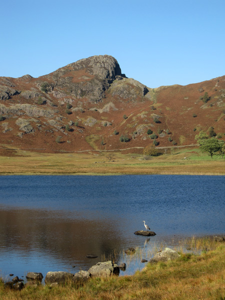 Looking across Blea Tarn to Side Pike, spot the heron