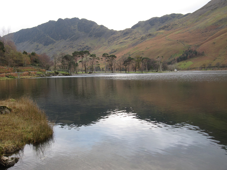 The Buttermere Pines with Haystacks behind