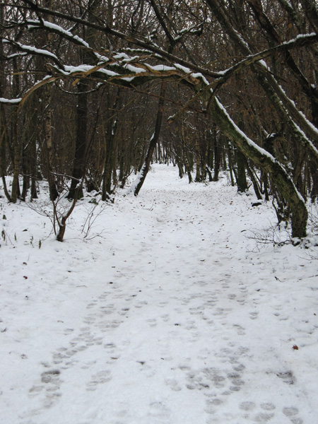 Entering Springs Wood