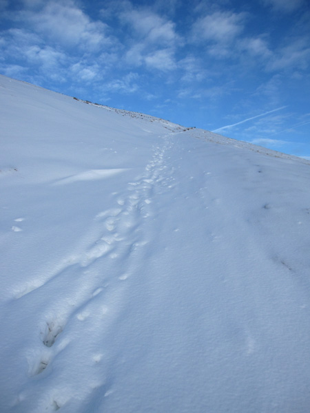 The same stretch of path as the third photo from last Wednesday. Mine will be the first footprints of the day