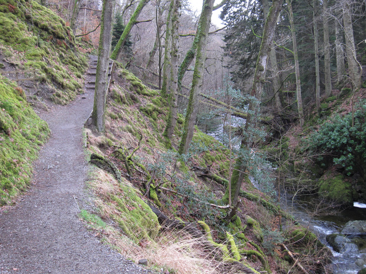 Back on the path network in the woodland around Aira Force