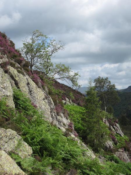 Rock, bracken and heather