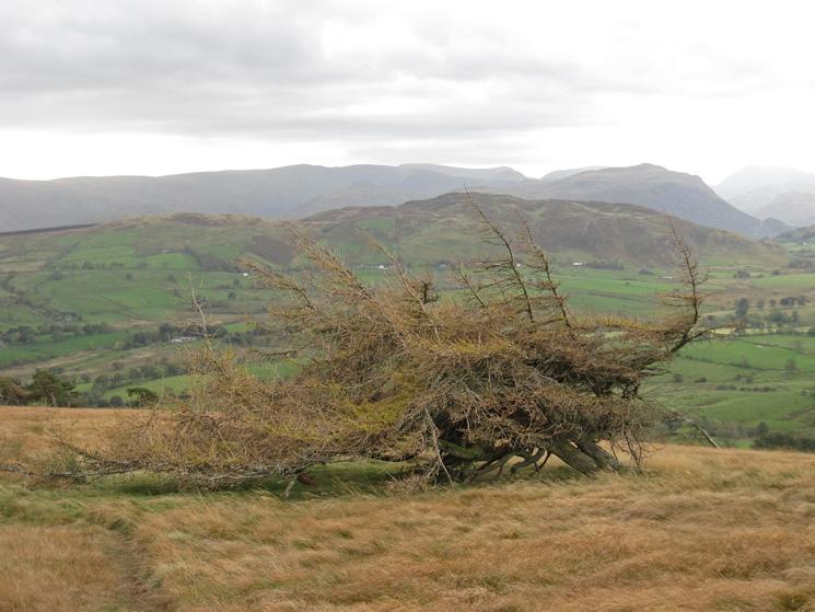 It's windy on Great Mell Fell