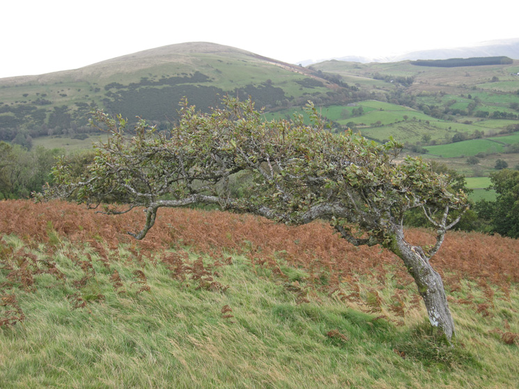 Looking across to Little Mell Fell