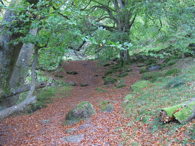 The path through Swinburn's Park