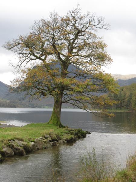 Fleetwith Pike behind a tree!