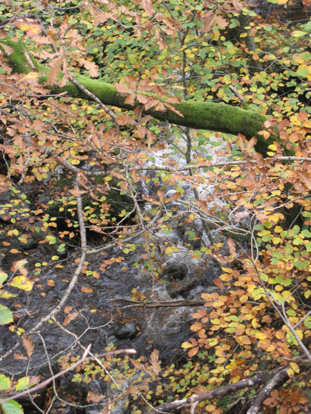 Colours in Springs Wood