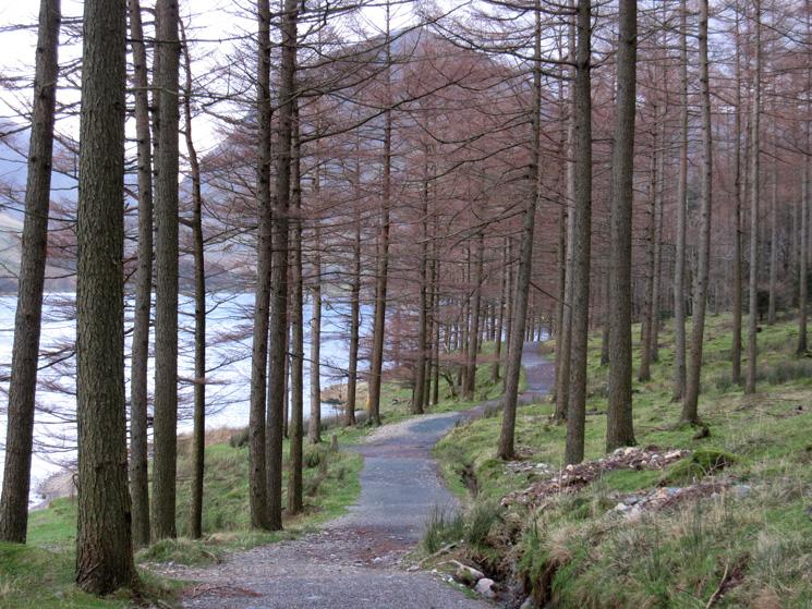 In Burtness Wood