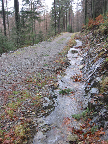 Forest track on the east side of Thirlmere