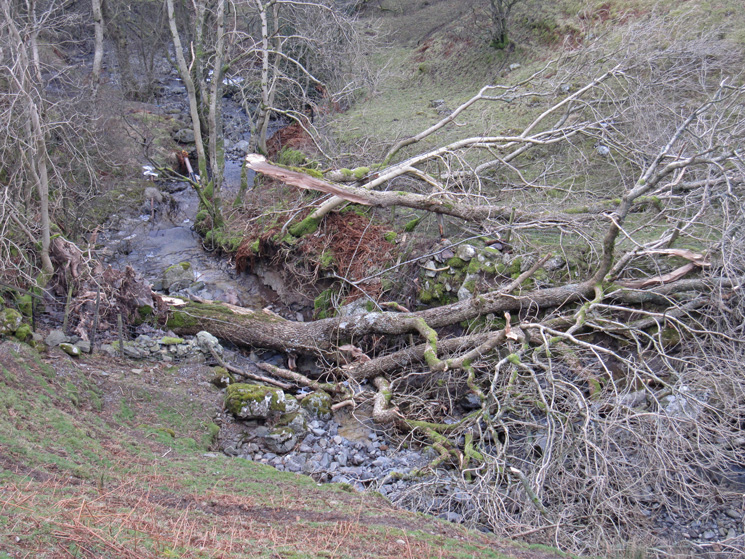 Timber, Brockle Beck
