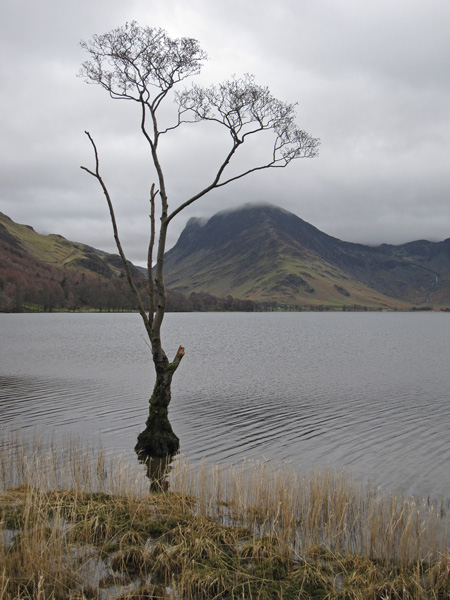 Up Buttermere to Fleetwith Pike from that tree