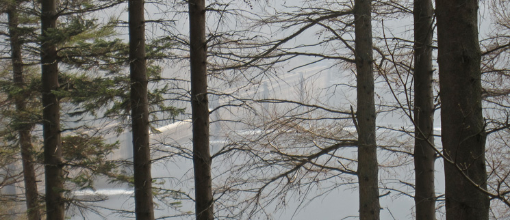 Haweswater dam, through the trees