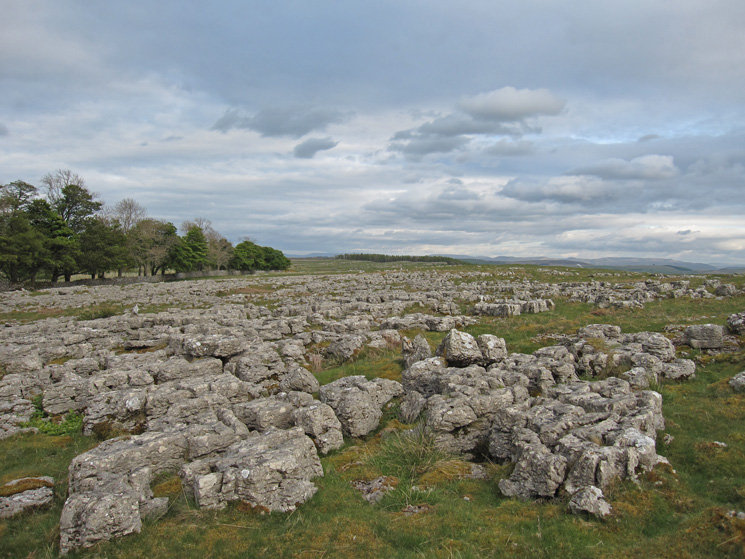 Limestone pavement