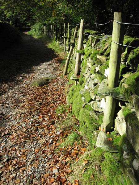 Wall and posts by the track from Red Bank to Loughrigg Terrace