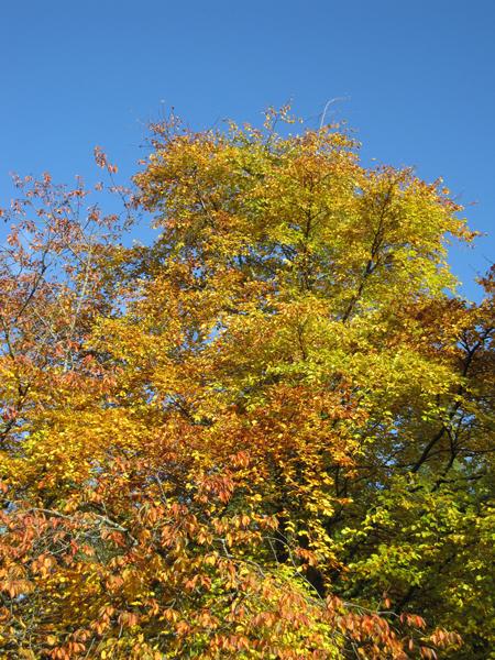 Autumn colour in the car park