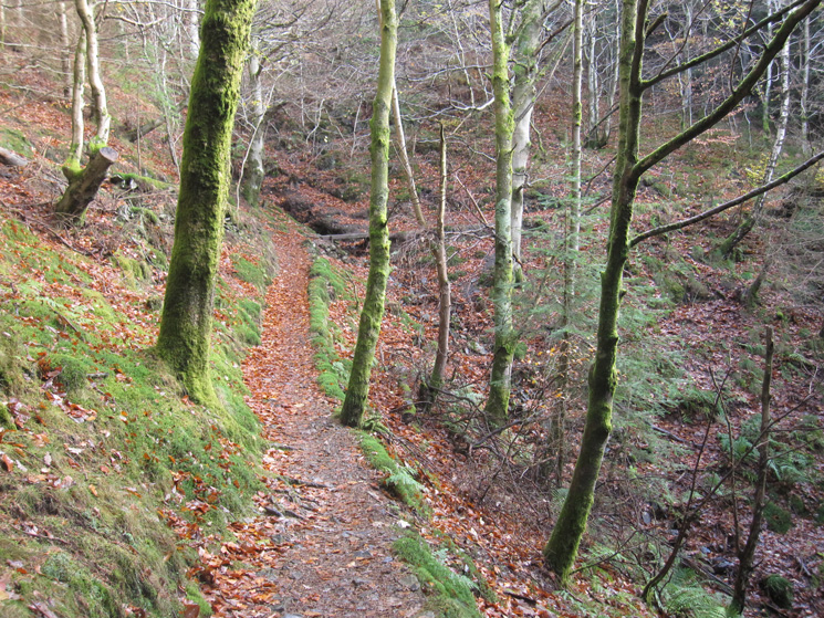 Heading up through the woodland