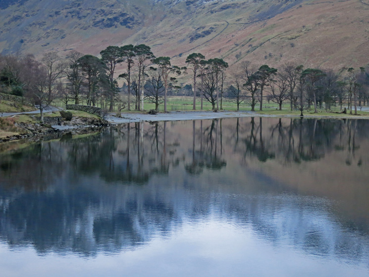 The Buttermere Pines and a reflection of Haystacks