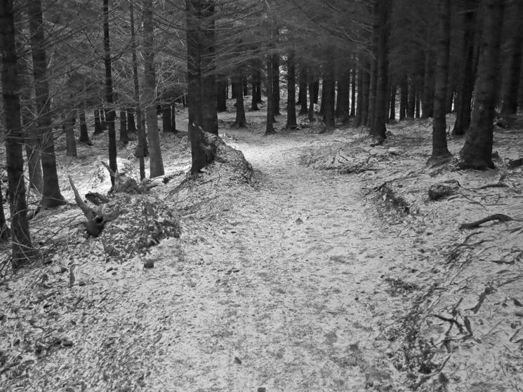 Path in Thornthwaite Forest