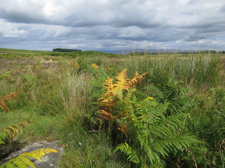 ...and the bracken is starting to die?