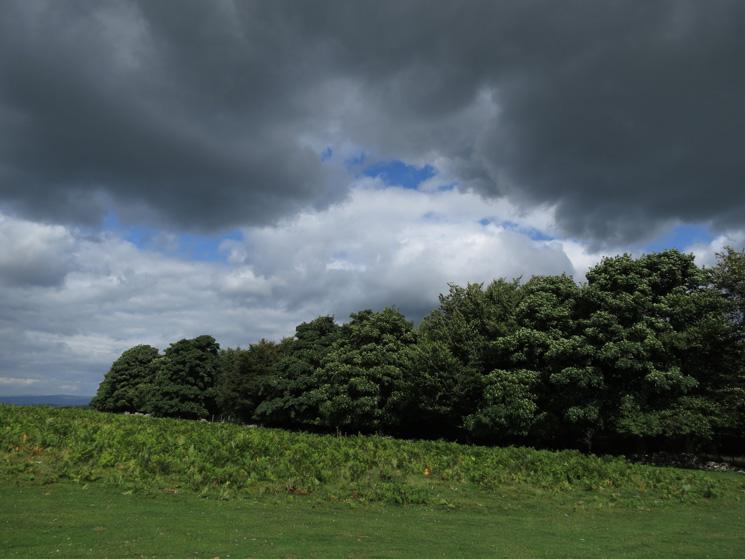 Woodland, Heughscar Hill